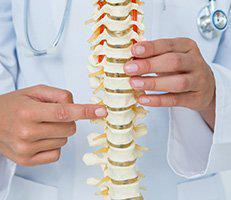 Chiropractor pointing to model spine